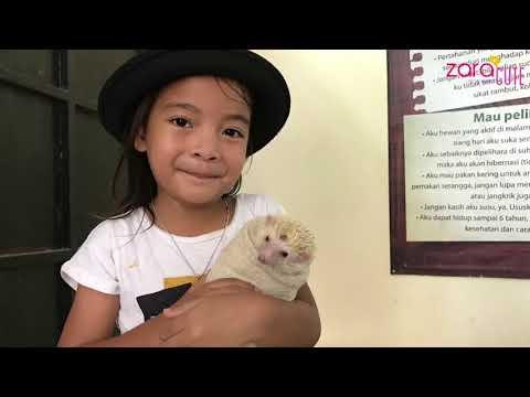 HOME SCHOOLING | Zara Memandikan Landak Mini | Lucunya Bayi Landak | Mengenal Hewan Landak