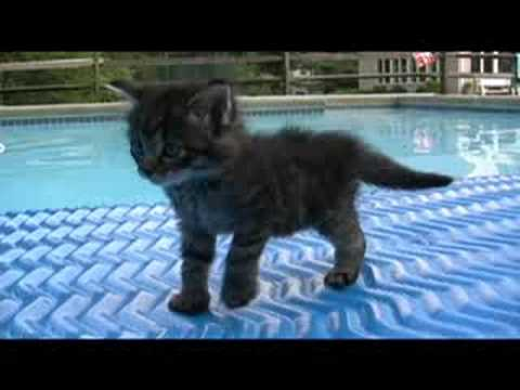 Puppies Youtube on More Cute Kitten And Puppy Pictures