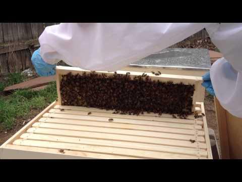 Adventures In Beekeeping – Day 5 (Part 2 – Erin & the Italians)