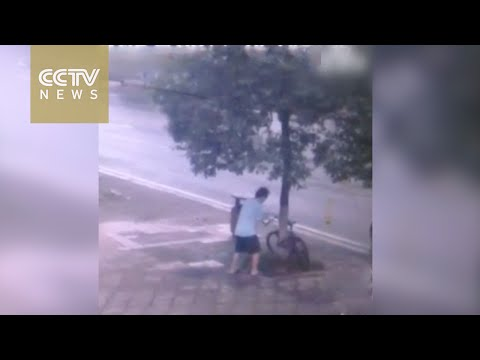 Man Cuts Down Tree To Steal Bike