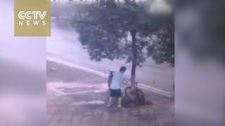 В Китае мужчина спилил дерево, чтобы украсть велосипед