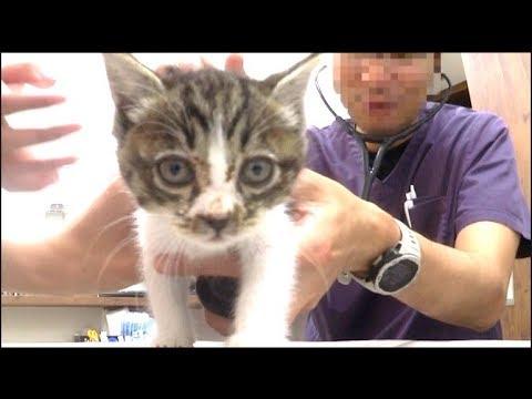 子猫が病気でした。病院に連れて行きます(緊急)