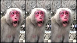 Beppu Japan  City new picture : Monkey Mountain in Beppu Japan - So Many Japanese Makak Monkeys!
