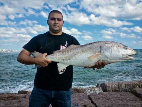 Playa Boca Chica Beach - A quick recap of just some of the catches of 2013 presented to you by Boca Chica Beach Legends! Hope you guys enjoy!