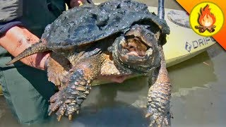 It All Began with a Snapping Turtle! by Brave Wilderness