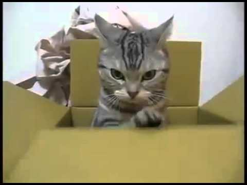 il gatto telegrafista - dolcissimo