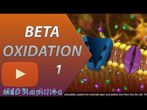 Beta Oxidation of Fatty acids Made Simple-Part 1