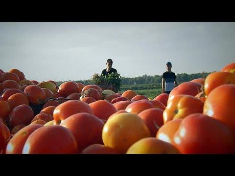 Ισραήλ: Νέες ποικιλίες ντομάτας ανθεκτικές στην ξηρασία – futuris