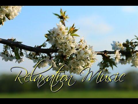 Relaxační hudba, zklidnění mysli a duše