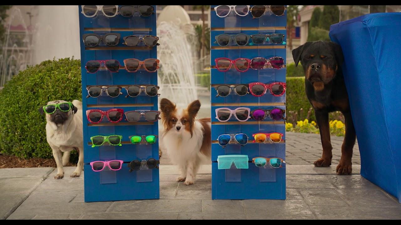 """""""Show Dogs – Entriamo in scena"""" al cinema dal 10 maggio"""