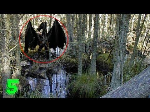 5 misteriosi avvistamenti di creature aliene e criptidi