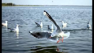 Nal Sarovar Bird Sanctuary in Gujarat India by JMZ full download video download mp3 download music download