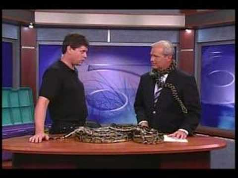 Anchor Mauled by Snake