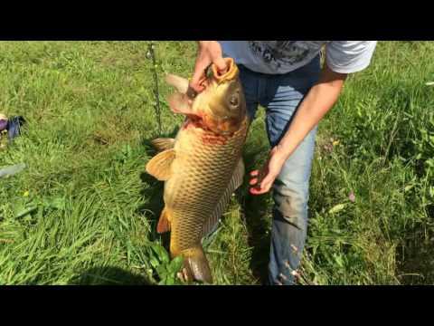 сазан ловить в озере