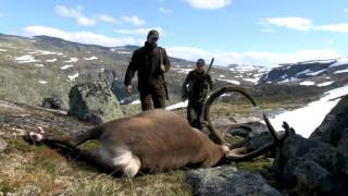 Video Hunt & Cook: Rudolf the Reindeer MP3, 3GP, MP4, WEBM, AVI, FLV September 2017