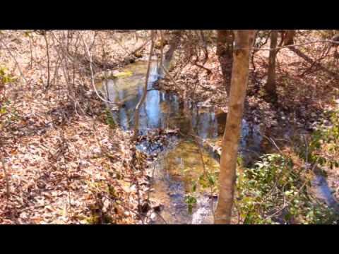 240 acres Ashland, AL