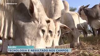 Solo cuidado aliado a tecnologia nutricional traz resultados na criação de gado