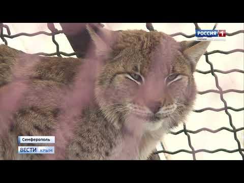 В Симферопольском зооуголке готовятся к туристическому сезону