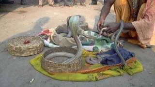 Asansol India  City pictures : Snake man at the excellency hotel in Asansol India
