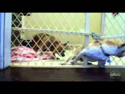 Chihuahua Fugitives