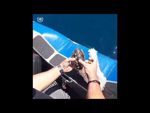 שוטרי יחידת השיטור הימי חילצו צב ים שהסתבך ברשת דייג מול חופי חיפה