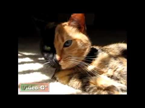 un gatto con due facce!