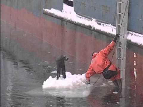 russia.-cane-alla-deriva-su-un-blocco-di-ghiaccio-salvato-dai-marinai-23