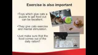 Prevention Of Obesity In Cats.wmv