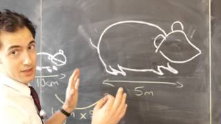 'There's A Math For That' - Of Mice And Elephants