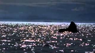 "Michael Jackson videoklipp Will You Be There (From ""Free Willy"")"
