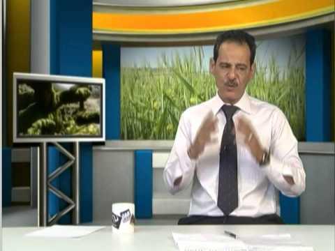 جنة الاعشاب مع حسن خليفه على البابلية بواسير 07