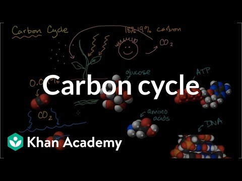 carbon cycle explained in detail