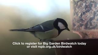 Why not join in the RSPB Big Garden Birdwatch (uk only)
