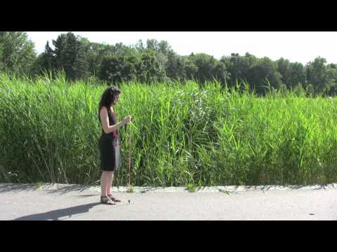 Easy Panorama Photography Video Tutorial