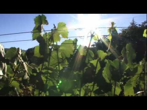 TJ Rodgers Discusses How To Prune Pinot Noir Grape Vines