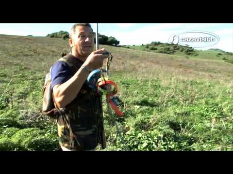 De caza con podenco andaluz