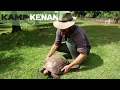 How to sex a Turtle or Tortoise : Kamp Kenan S1 Episode 20