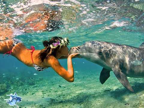 John McLaughlin – The Dolphin