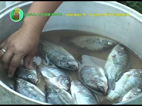 Paggawa ng Smoked Tilapia or Tinapa