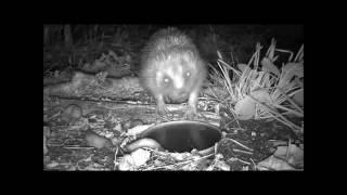 Wildlife Trail Camera - 23.9.2016