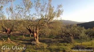 Les oliviers / Gli ulivi