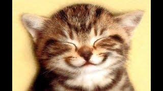 Los Videos más Chistosos de Gatos, gatitos, animales, perros, cachorritos, muy divertidos todos los días, los más tiernos, te vas a reir.Siguenos en  https://www.facebook.com/GatosRisicas0 y https://www.twitter.com/GatosRisicasSuscribete Todos los días los mejores videos Gatos y demás animales tiernos y divertidos!! https://www.instagram.com/gatosrisicas/