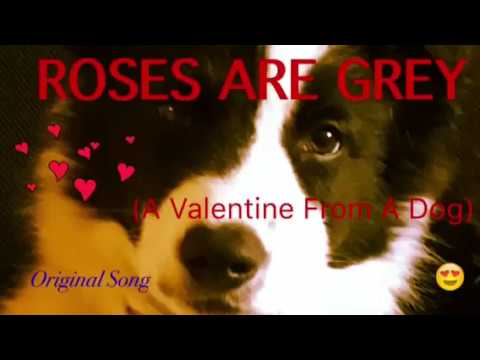 Roses Are Grey (A Valentine From A Dog) 🐾 - Original Song ♥️