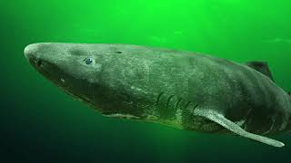 BIGGEST Sharks Ever by Epic Wildlife