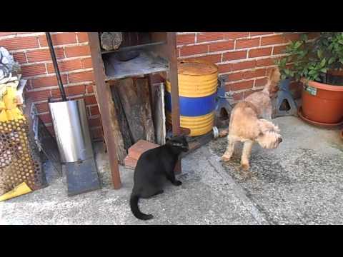 Pillo, Siroco and the cat 2
