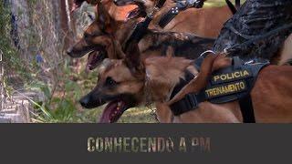Cães em ação