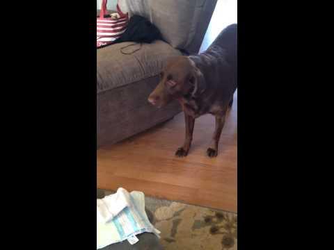 媽媽超興奮跟狗狗說他的人類妹妹快要到家裡來了,結果他的反應簡直就是反高潮啊…