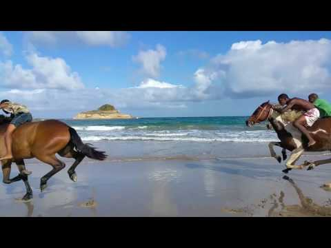 Horseback Riding in St.Lucia with Atlantic Shores Riding Stables