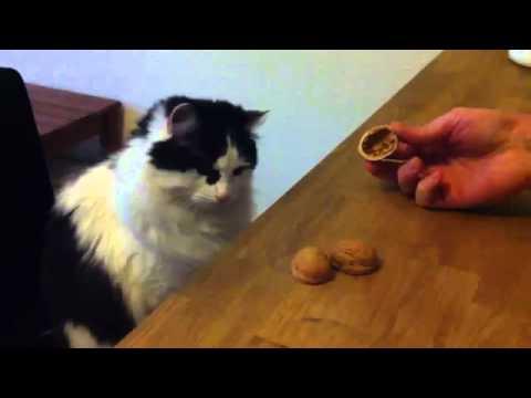 好可愛的貓,賭起猜東西的遊戲絲毫不遜色超厲害!