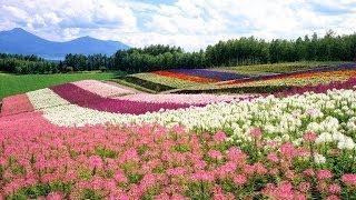 Ashibetsu Japan  City pictures : HOKKAIDO Japan Furano Ashibetsu Nature Park Documentary